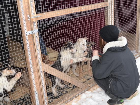 Как и чем живет пункт передержки  животных в Чебоксарах