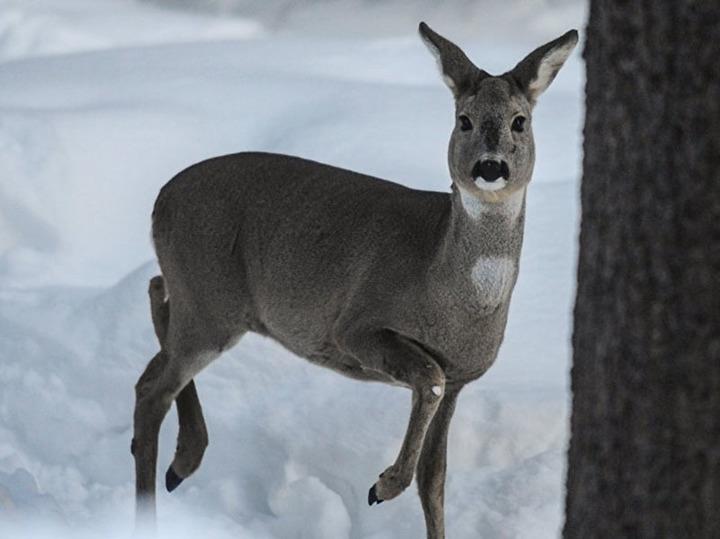 ВВолгоградской области возросла  численность копытных ипушных животных